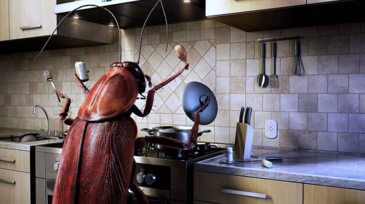 Жук на кухне