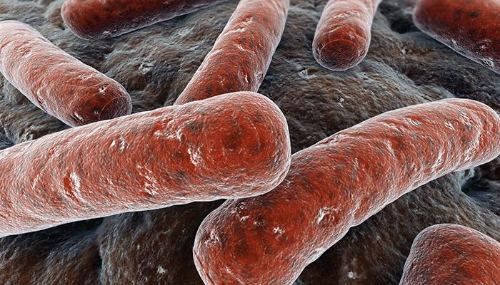 Болезнетворная инфекция